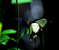 2011-05 The Butterfly Project