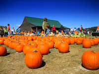 Pumpkins, Virginia